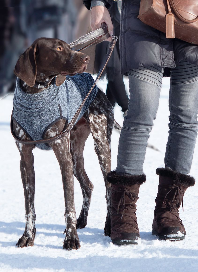 Brown and White Hound Dog with Owner in St. Moritz by Zurich Photographer Leslie Argote