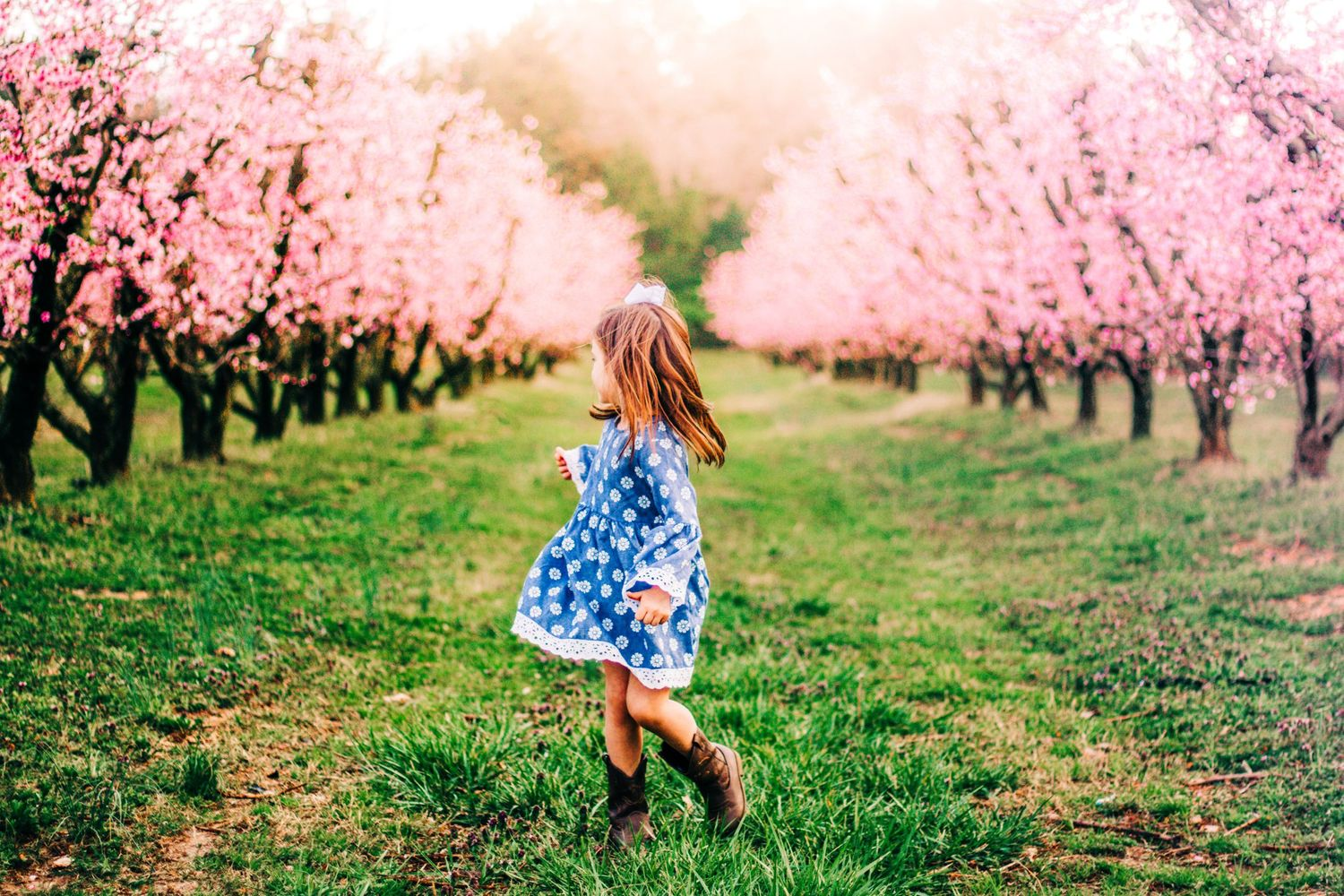 Little girl standing amongst the peach orchard blooms in Fort Mill, SC for a photo session