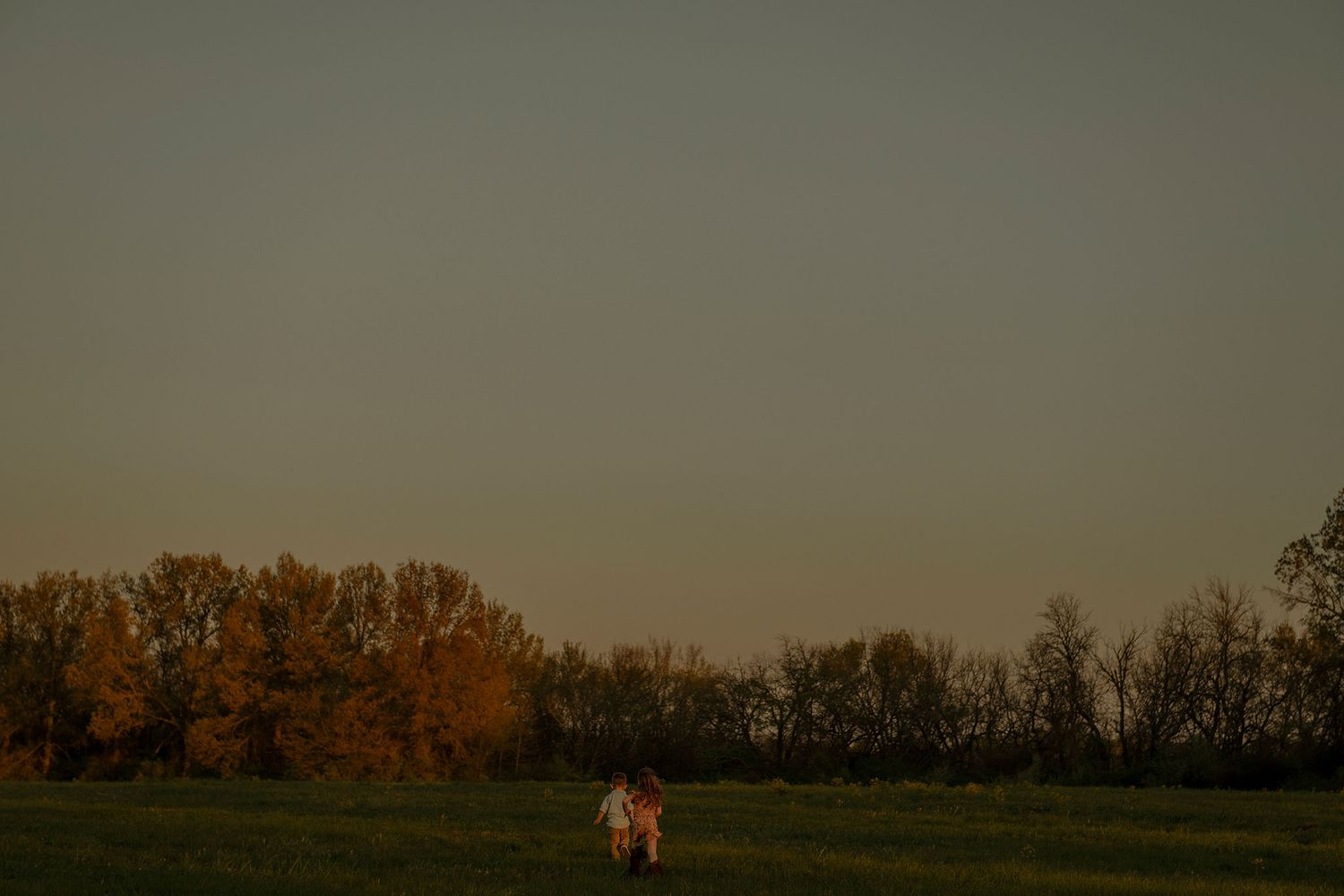 young children and siblings, run through field at golden hour (sunset)