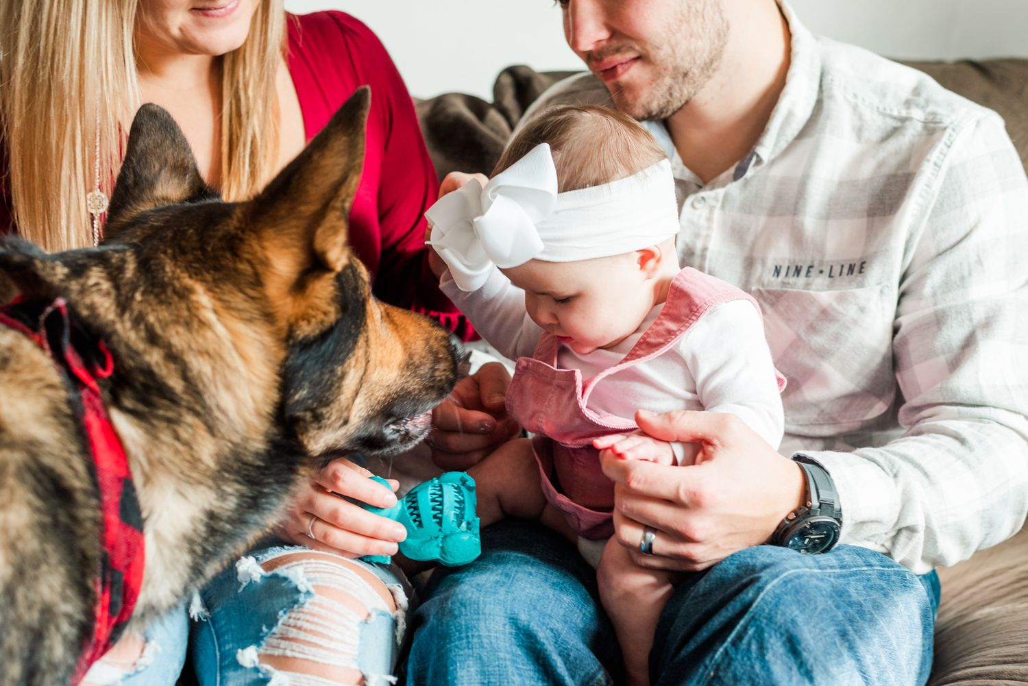 Lifestyle family photoshoot in the home with german shepherd sniffing baby wearing bow in Gibsonia, Pennsylvania