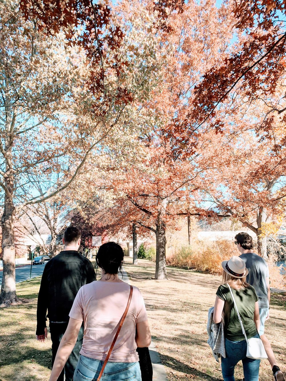 Group of young adults from behind walking along a road filled with Fall-colored trees