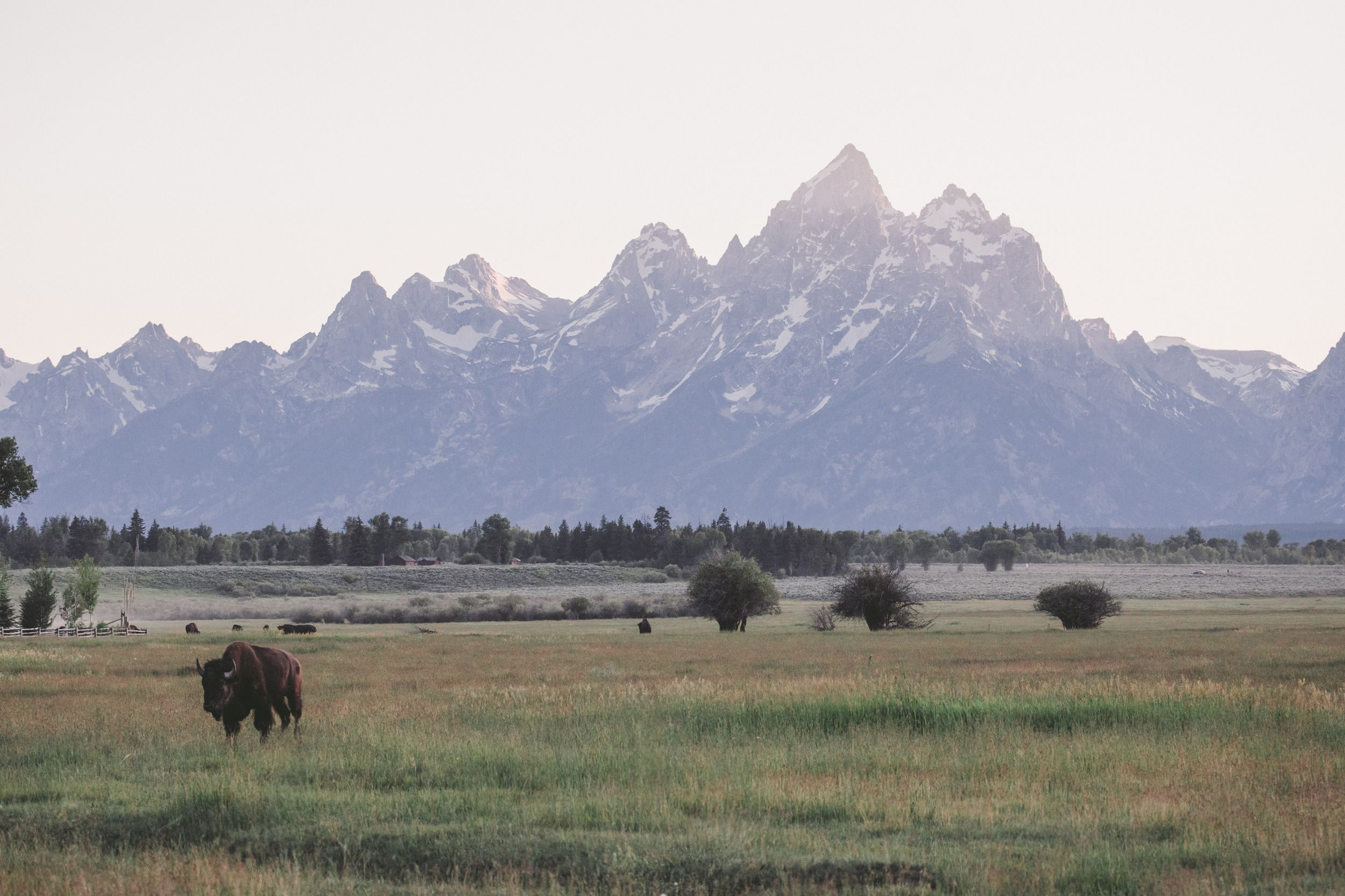 how to get married in grand teton national park