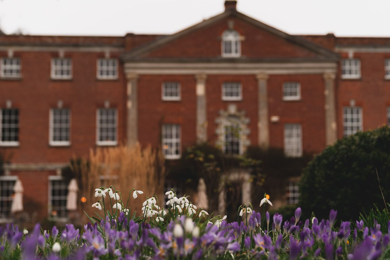View of 10 Castle Street, Dorset wedding venue, through crocuses and snowdrops.