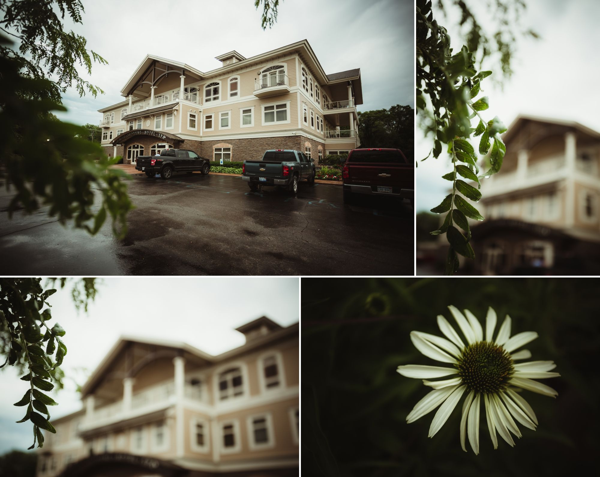 Photos of the outside of the hotel, a white flower, and water droplets on leaves on a tree.