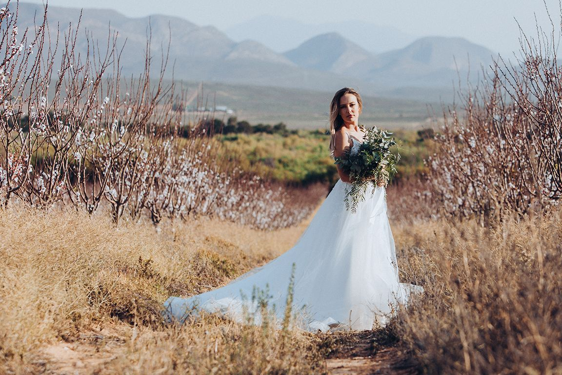 Artifex Wedding Cape Town