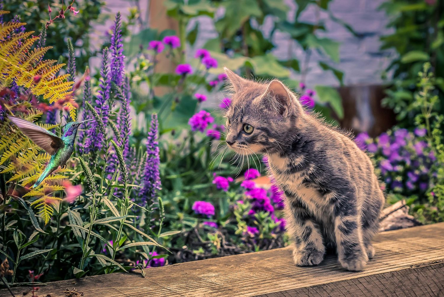 kitten and a hummingbird in the garden