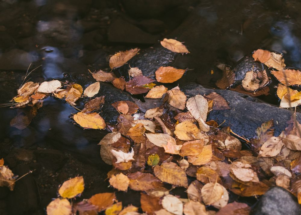 autumn leaves, fall photos, fall foliage, m.photo, Emily Butz photography