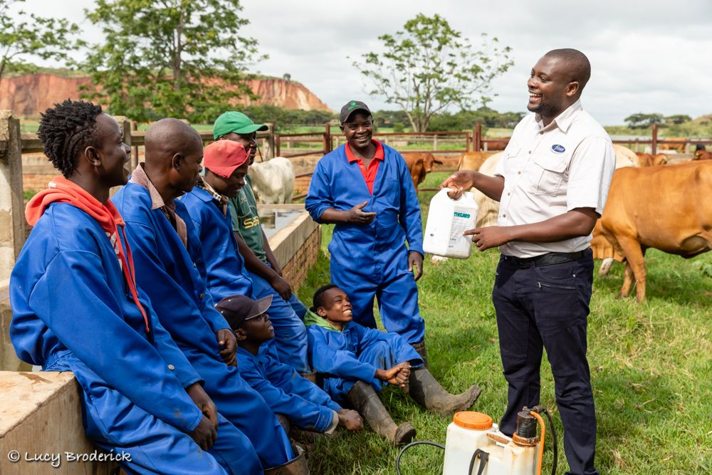 A Vet teaching cow herders about Vetinary supplies