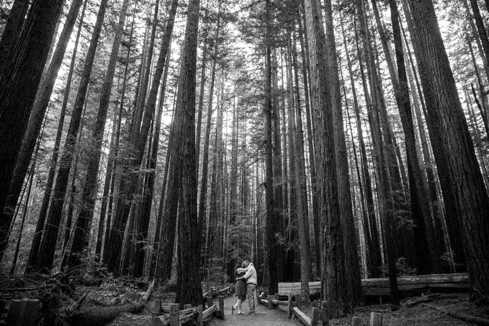 rebecca skidgel photography armstrong redwoods engagement couple kissing holding each other