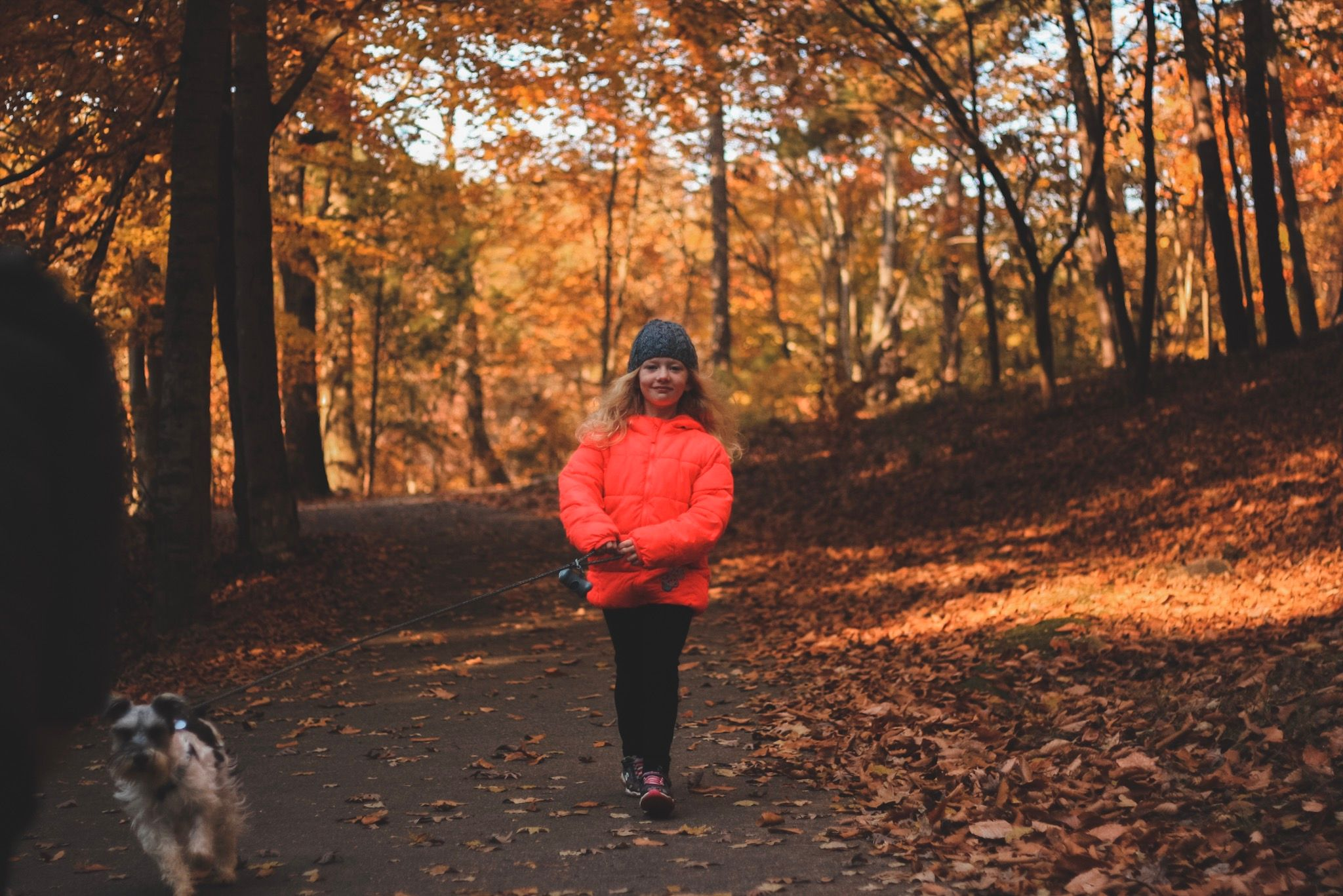 young girl walking through autumn forest walking her miniature schnauzer