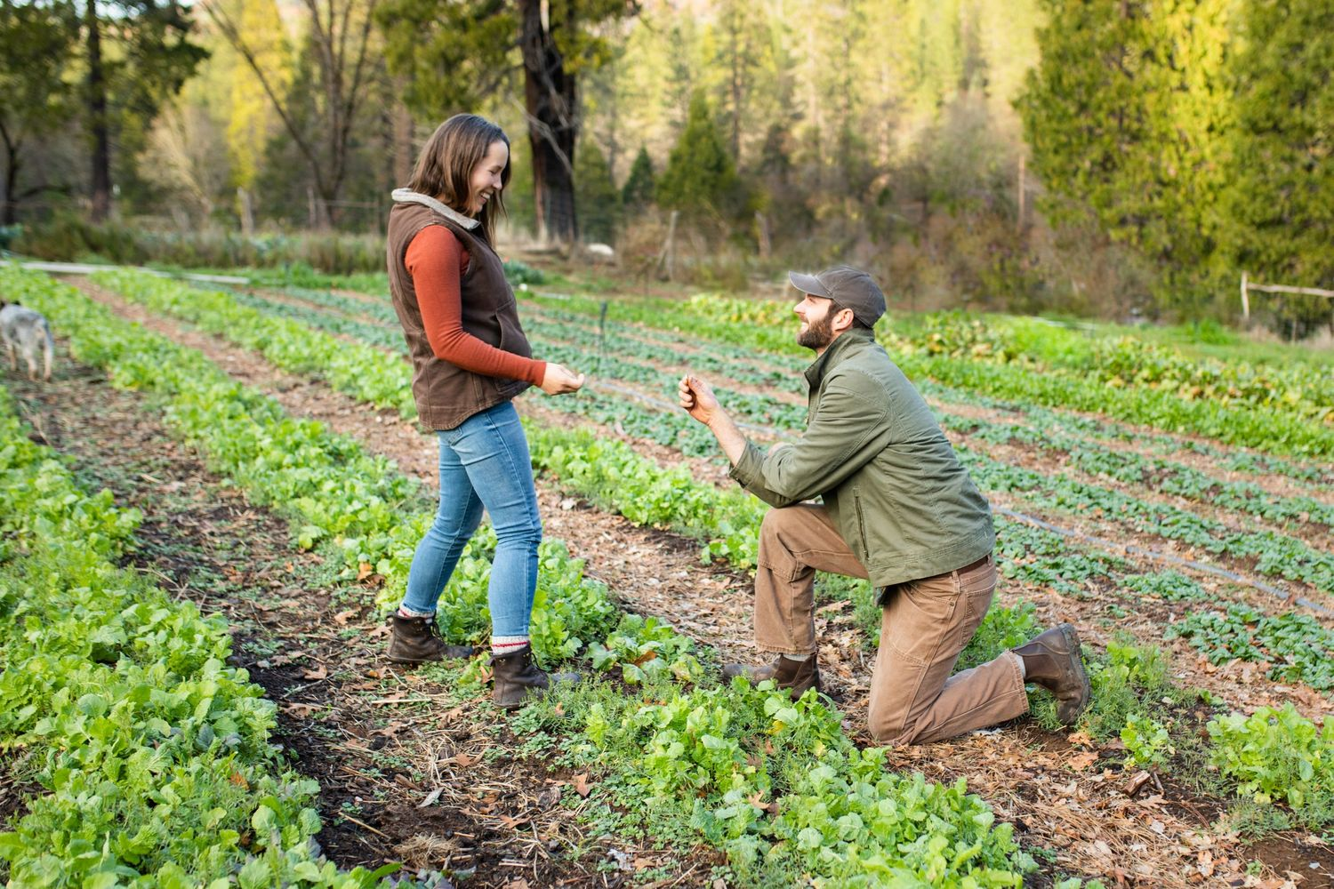 A groom on one knee offering a ring to his beloved while they're in a green, growing field in Nevada City, California
