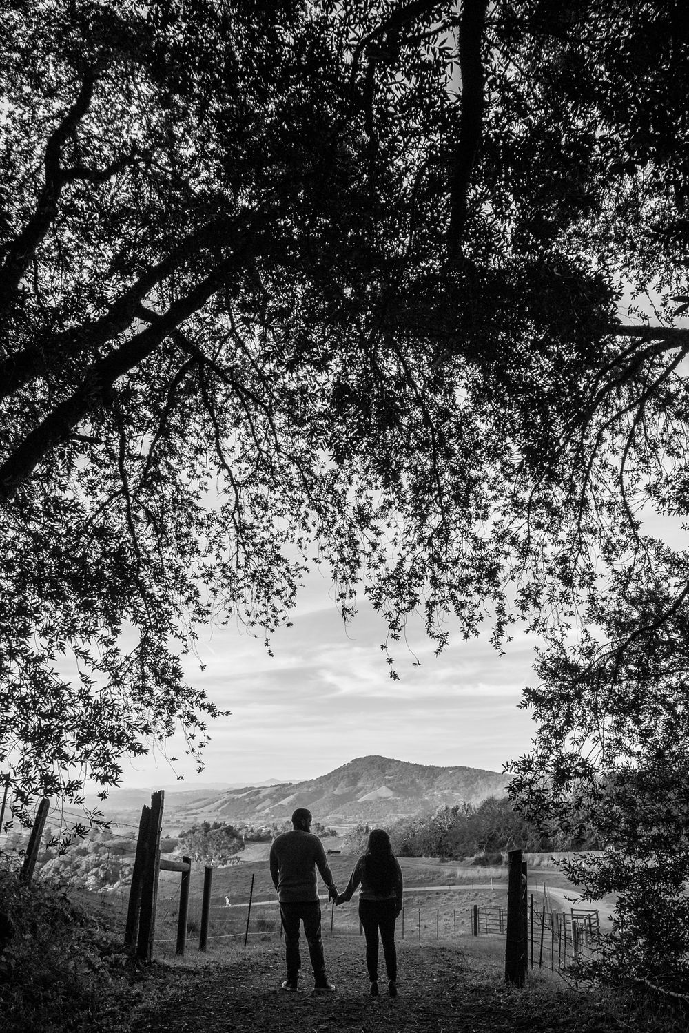 rebecca skidgel photographer engagement session at north sonoma mountain couple smiling silhouette with vineyards