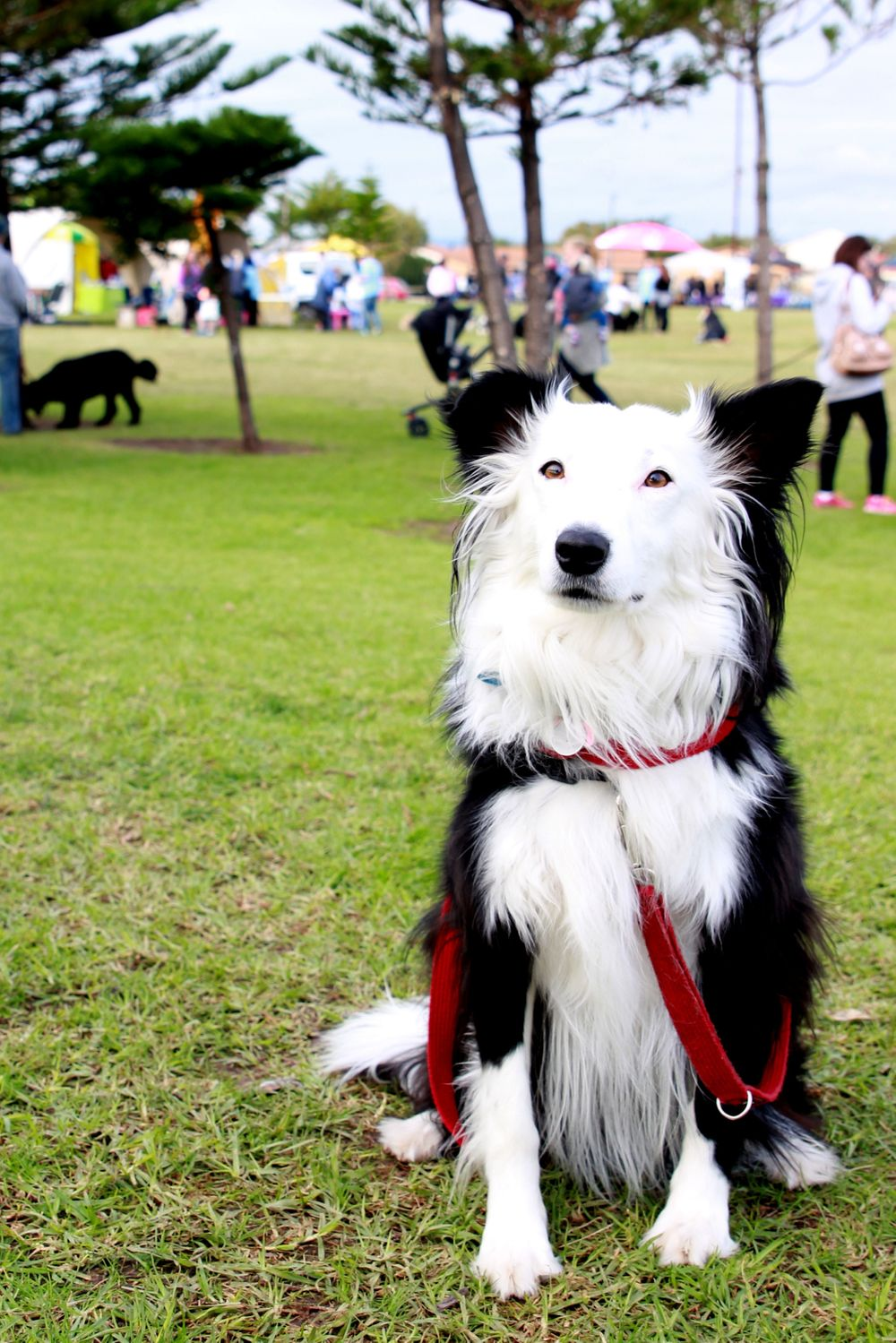 Adelaide Pet Events Photographer