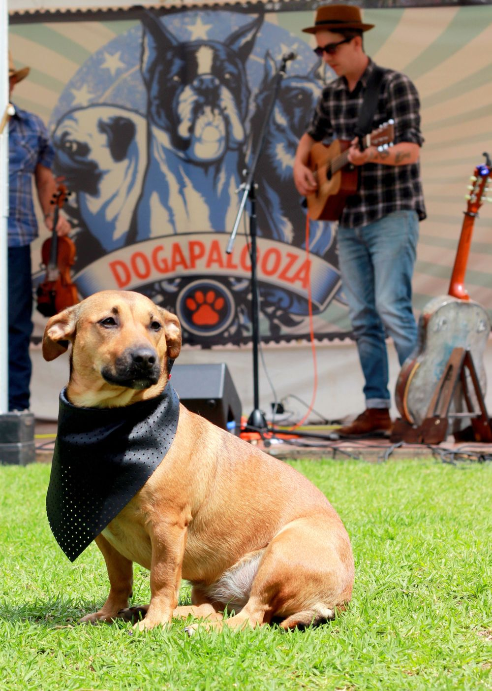 Pet Photographer with posing pooch at Dogapalooza in Adelaide