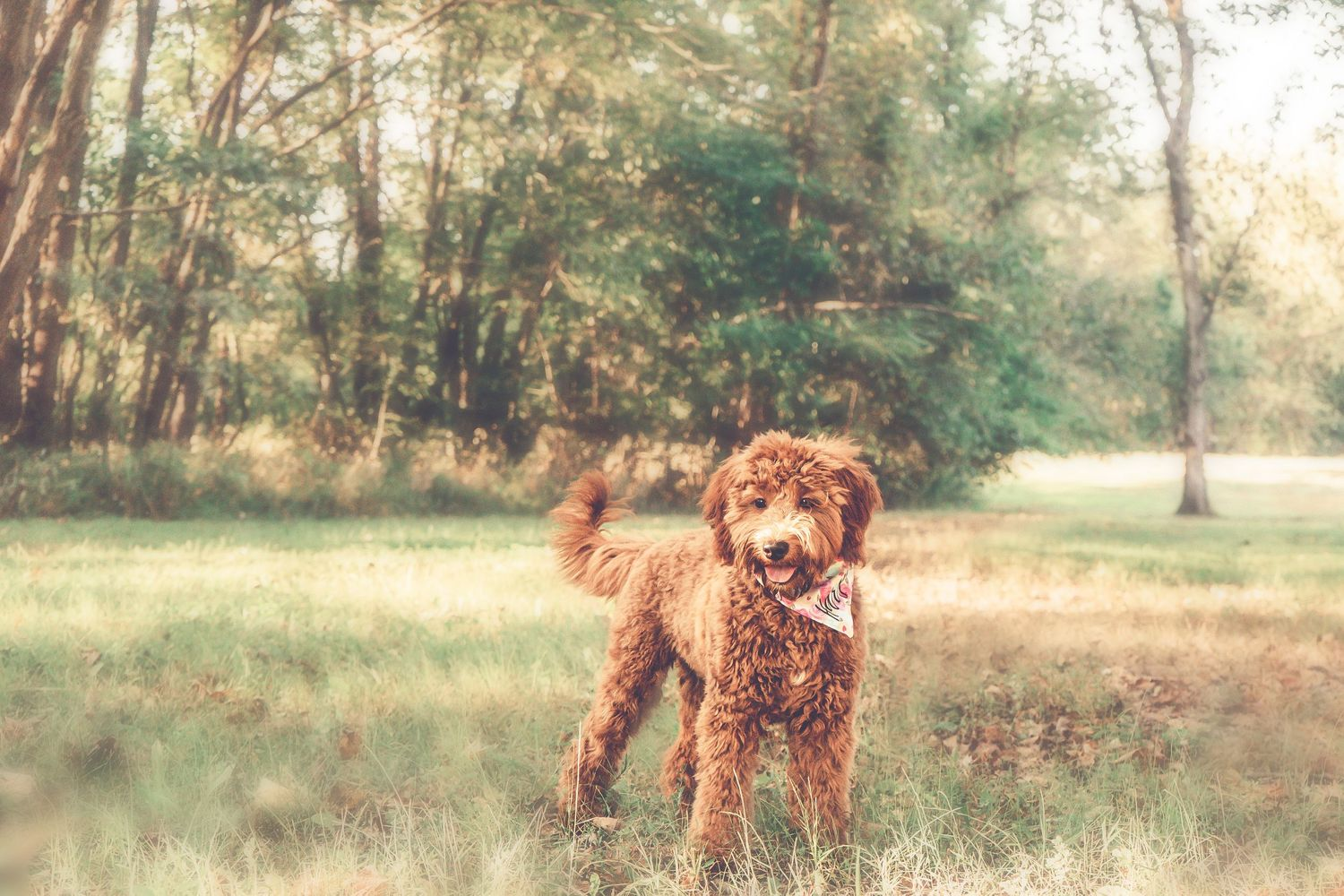 dog photo/pet photo session in Carterville IL