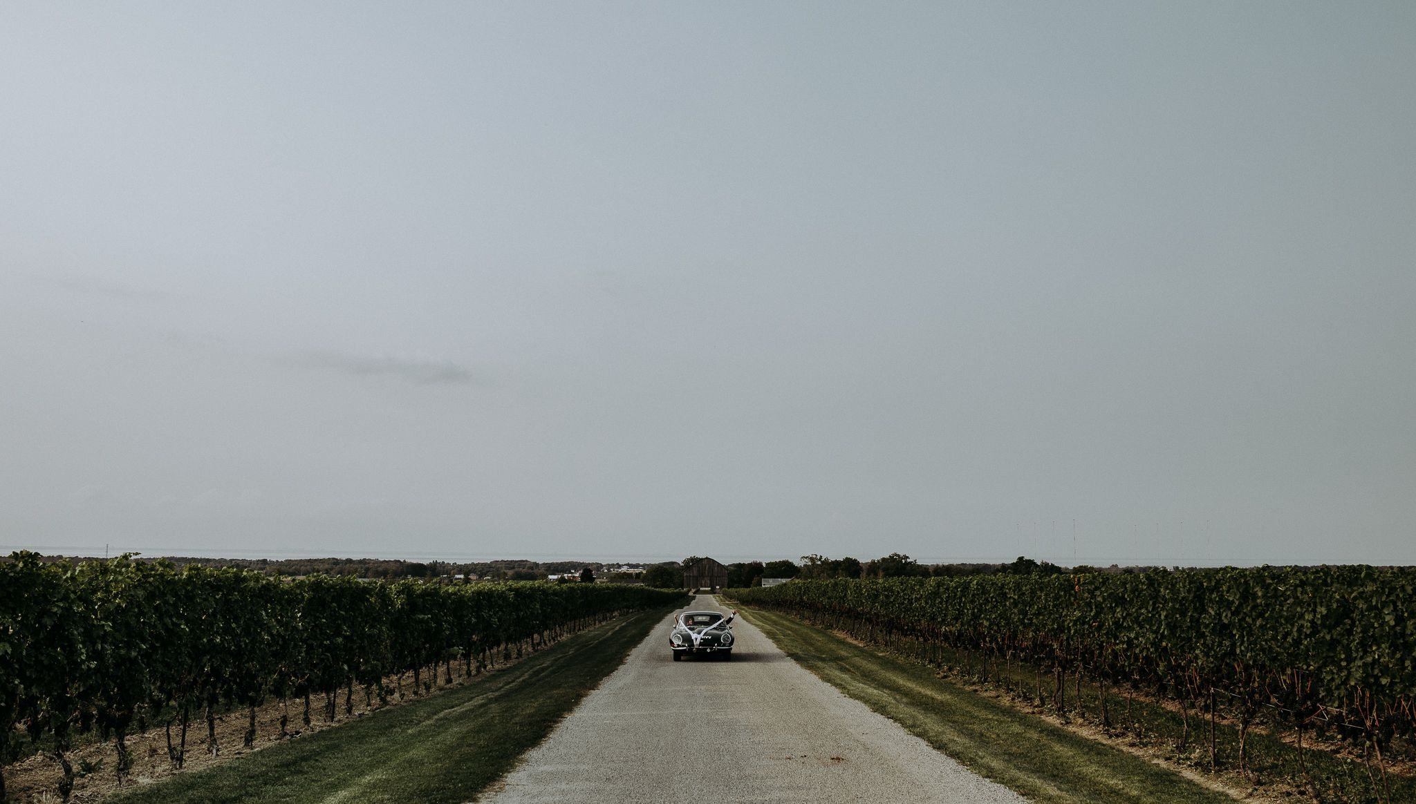 Toronto bride and groom in vintage Porsche driving down in winery with their hands out screaming just married.