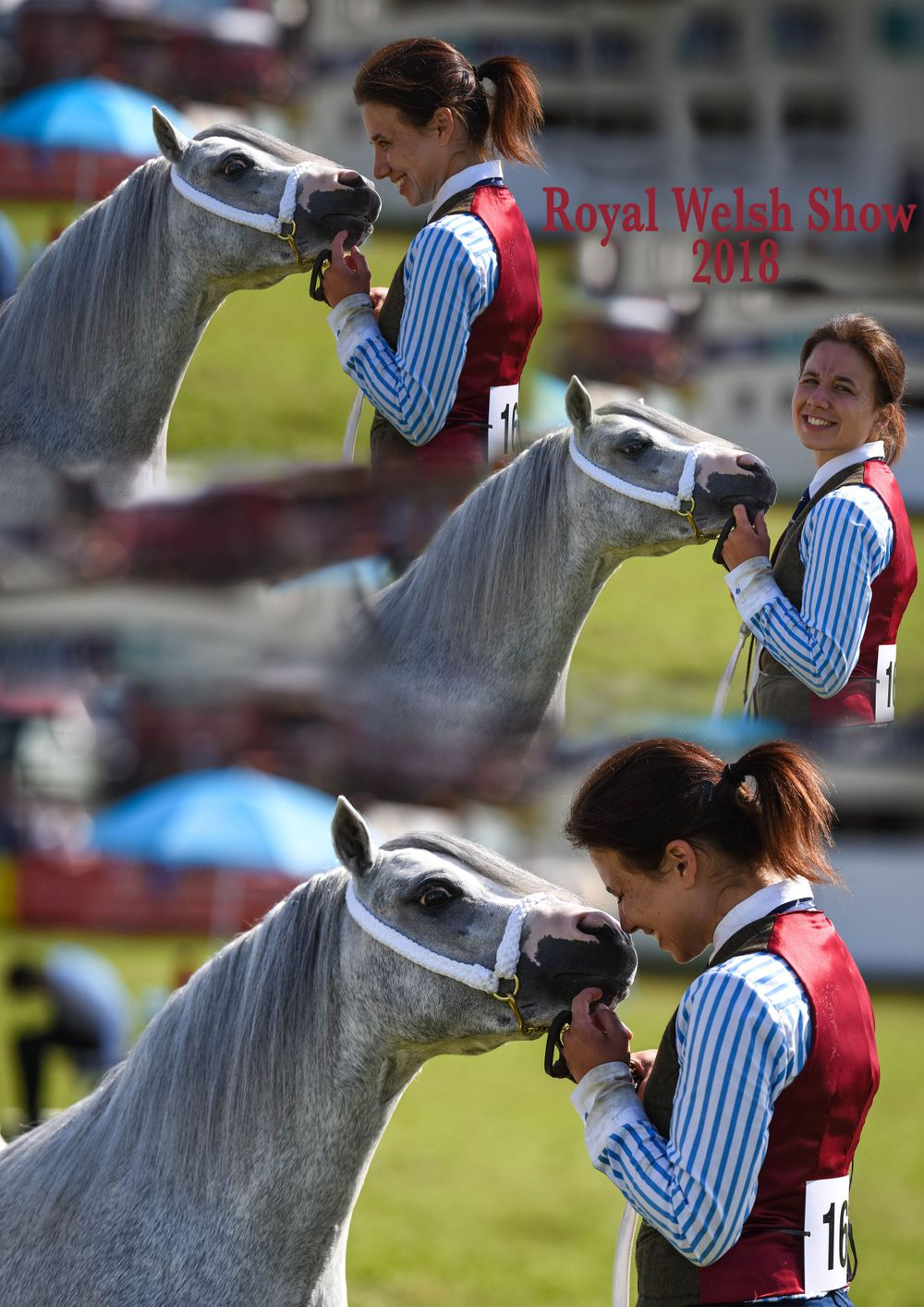 Royal Welsh Show Photographer