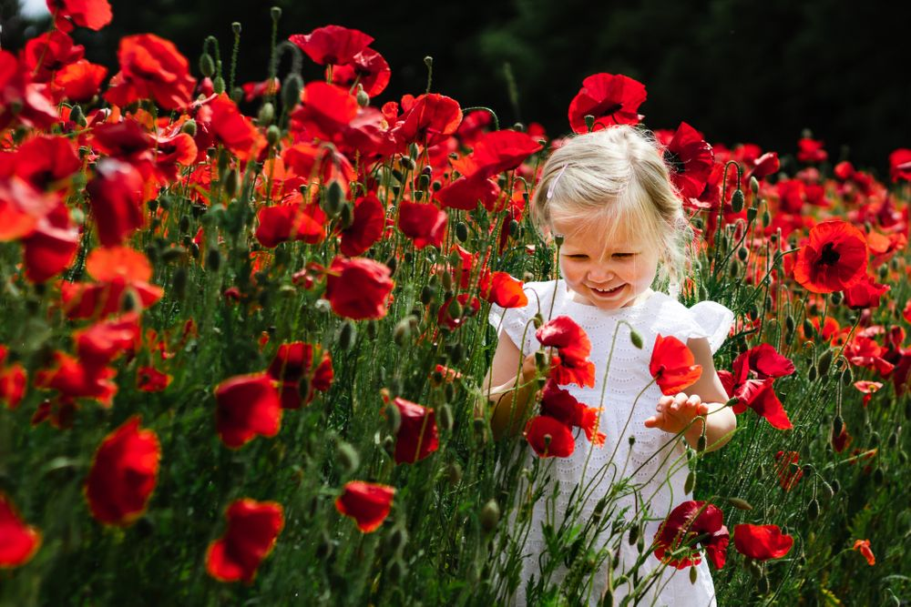 A 2 year old in a white dress stands, laughing in a poppy field in the bright sunshine.