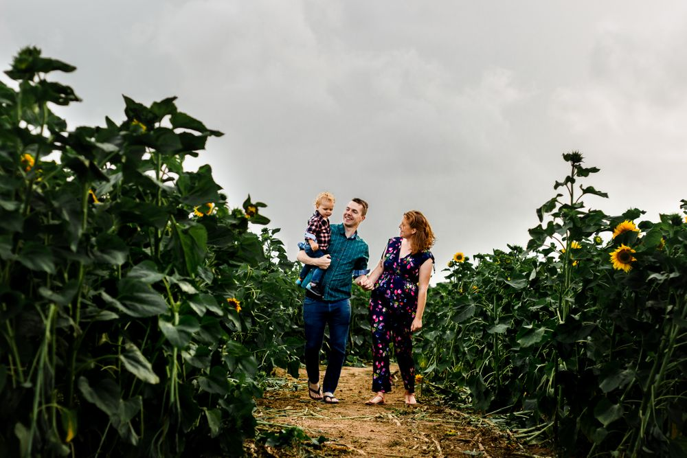On an overcast day in a sunflower field on Hayling Island a family walk through the flowers holding hands and smiling.