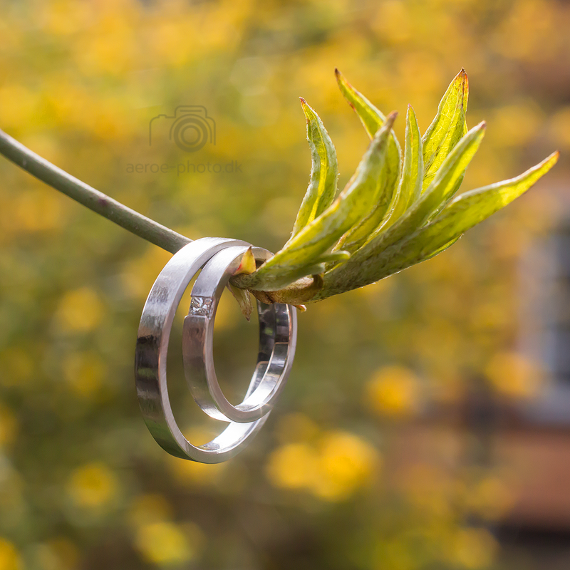 Wedding rings on a sunny spring day