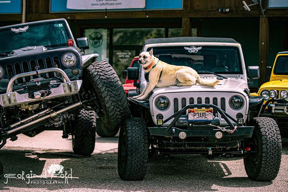 Jeeper, Georgina Ford Photography