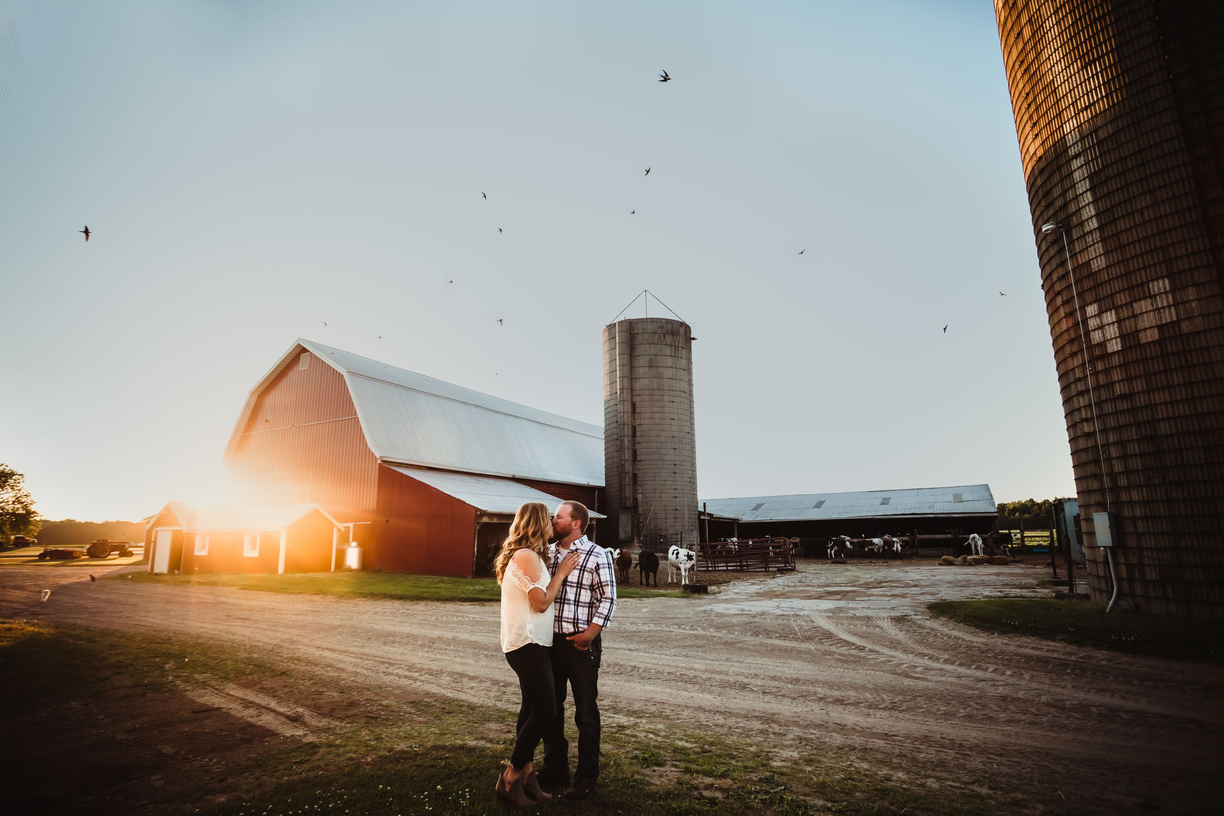 A wide shot of a man and woman kissing with a barn, cows, and sunset behind them. Birds are in the air.
