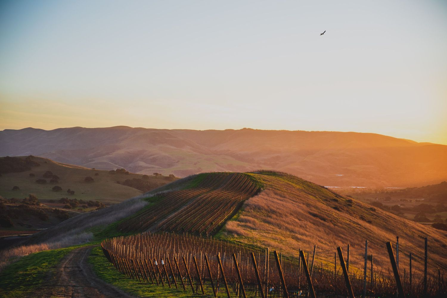 Landscape photo of John Sebastiano Vineyard in Buellton, California by Heather Daenitz of Craft & Cluster