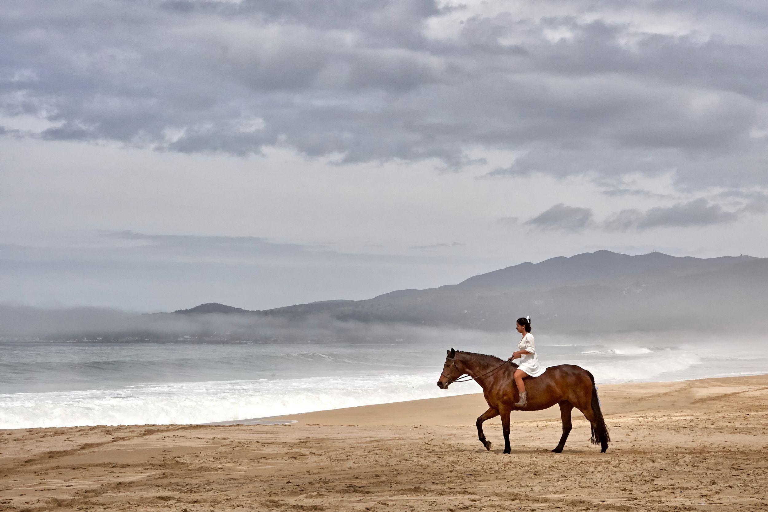 Foggy morning on the beach with a horse