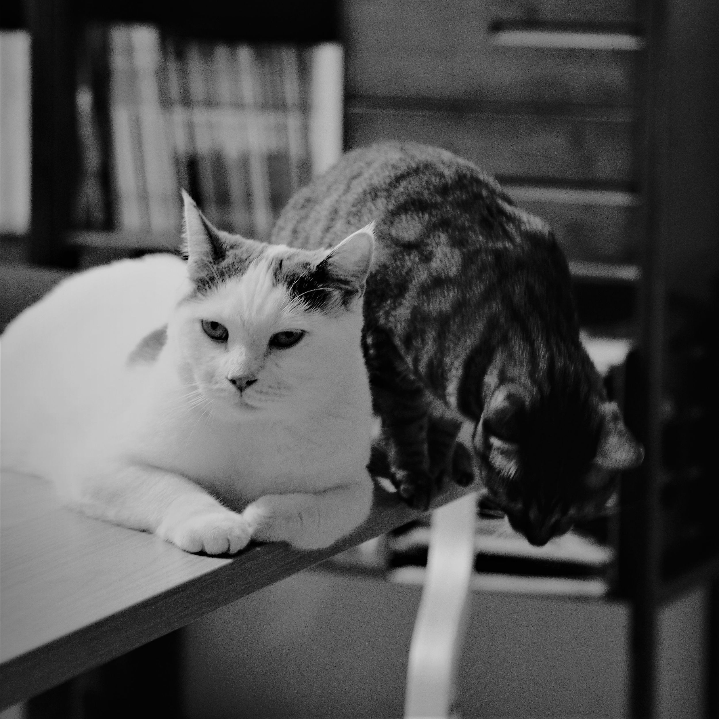 Two cats sitting awkwardly on a table. the tabby one is about to jump off.