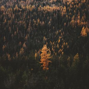 Fall colors in a forest
