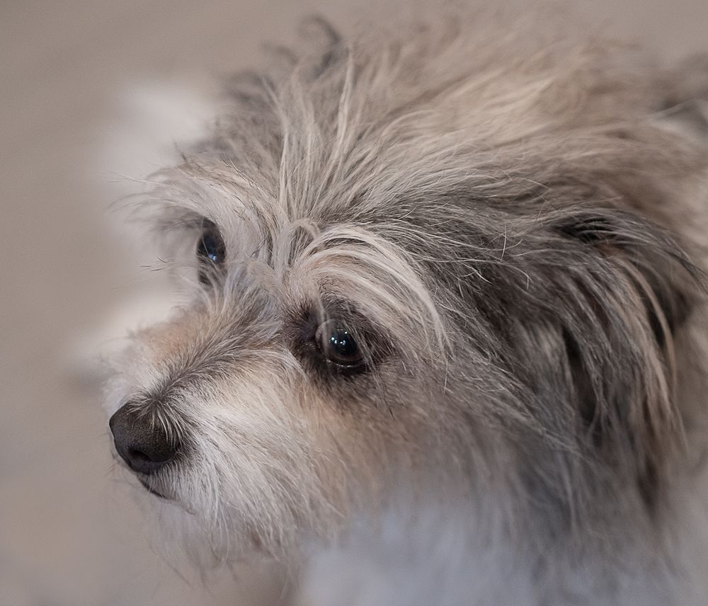 Fine Art Pet Photography of a Terrier Mix Rescue Dog in New Orleans by Leslie Argote