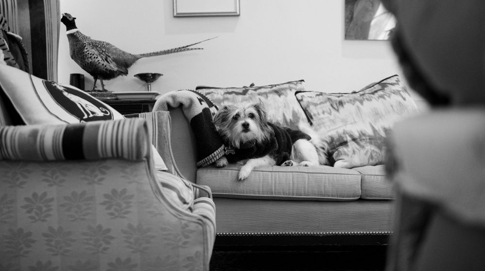 Journalistic Fine Photography by Leslie Argote of Terrier Rescue Dog on the Sofa