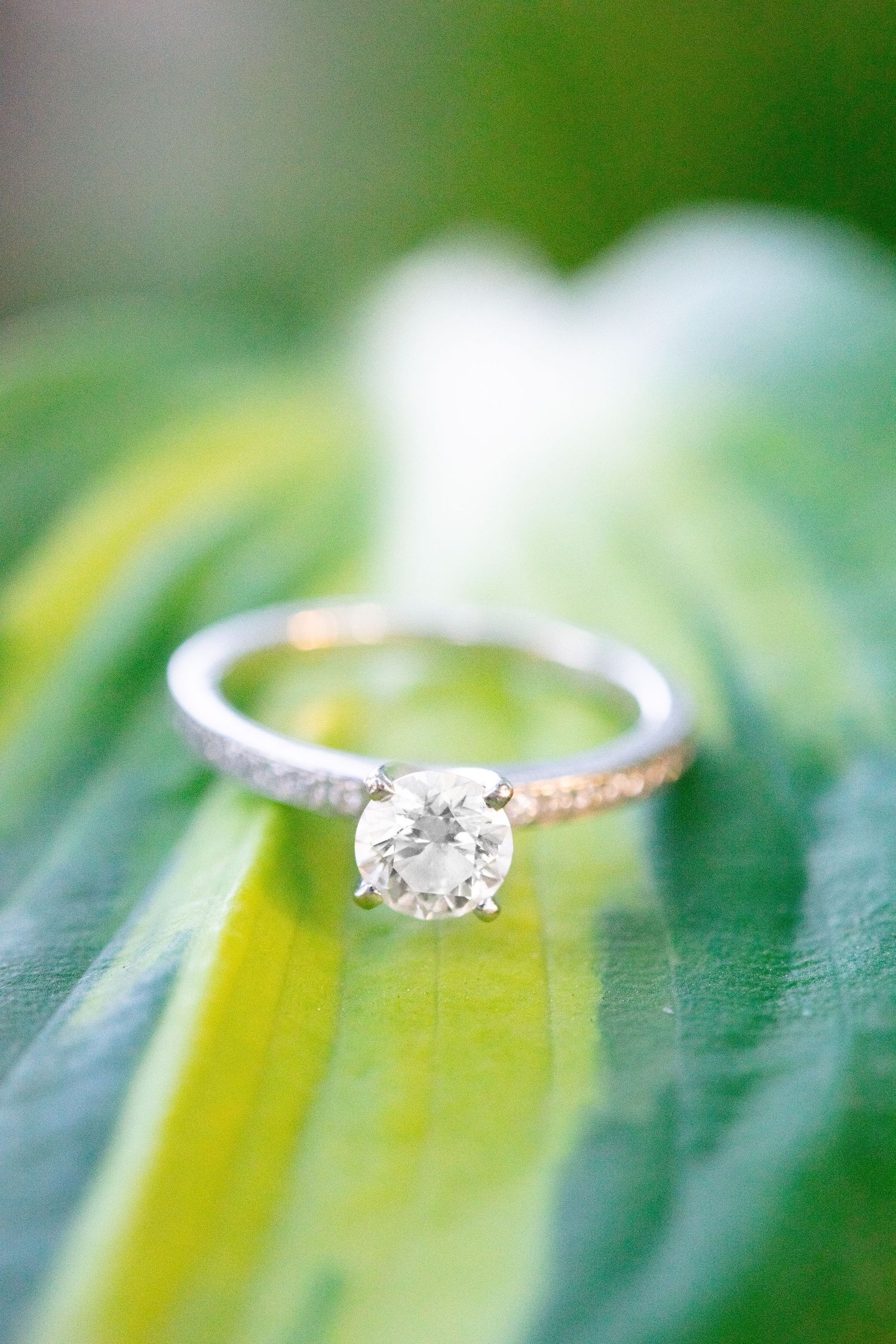 up close of a round white gold diamond engagement ring on a variegated leaf