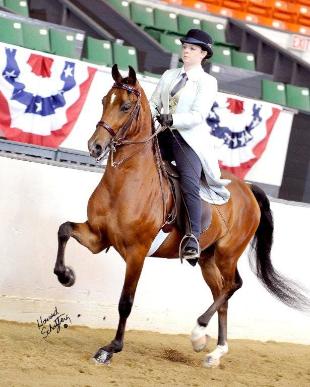 CT Professional Horse Photographer Kate Lussier with her Morgan Horse