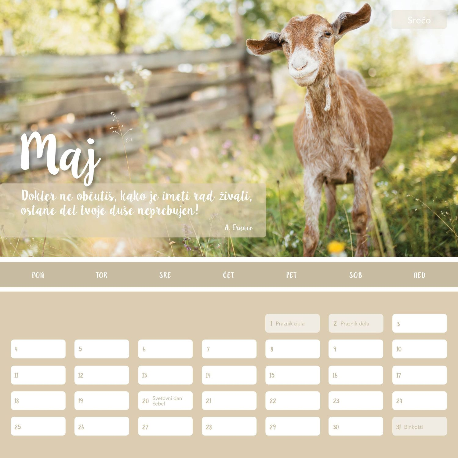 Calendar Design and photoshooting for animals