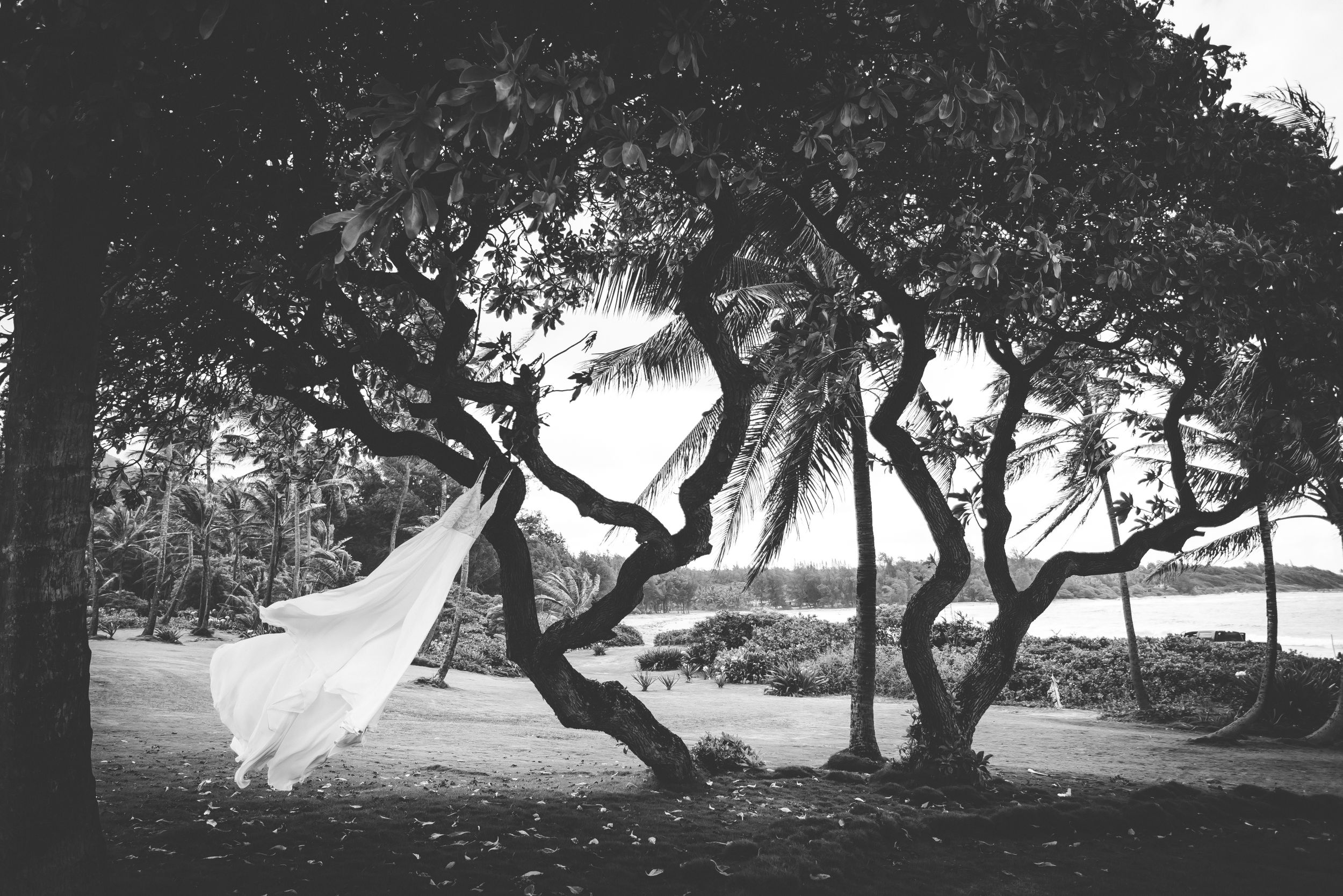 Black and white photo of a wedding dress hanging in a tree. The wind is blowing it to the left. Ocean in the background.