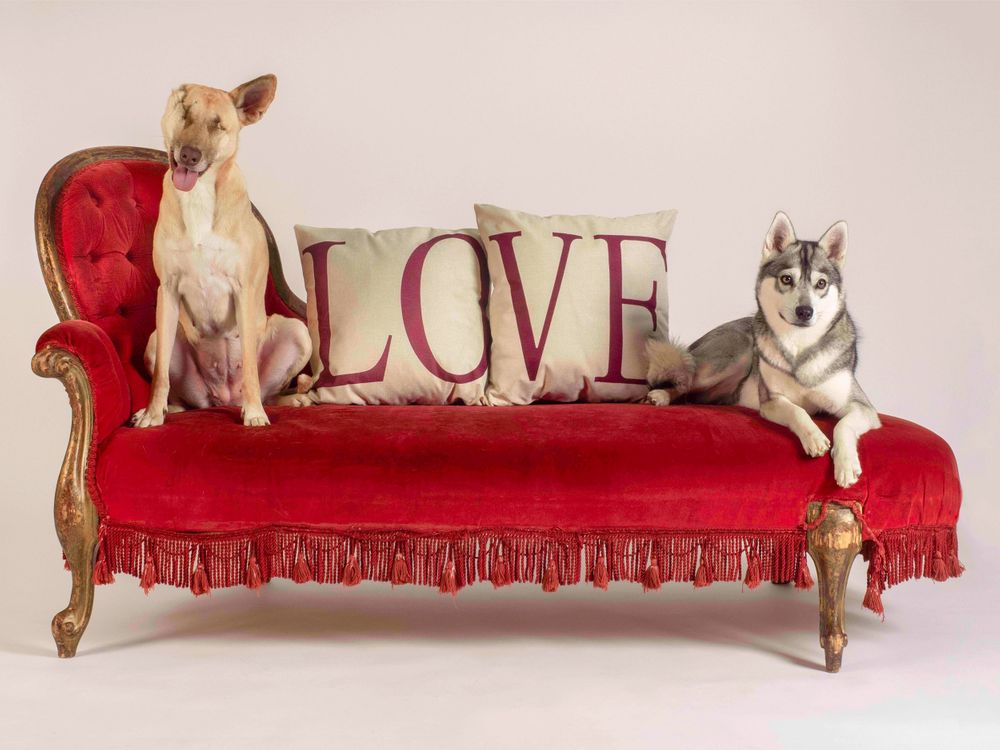 Maggie the Wunderdog and Mishka in 'Lay all your Love on Me'