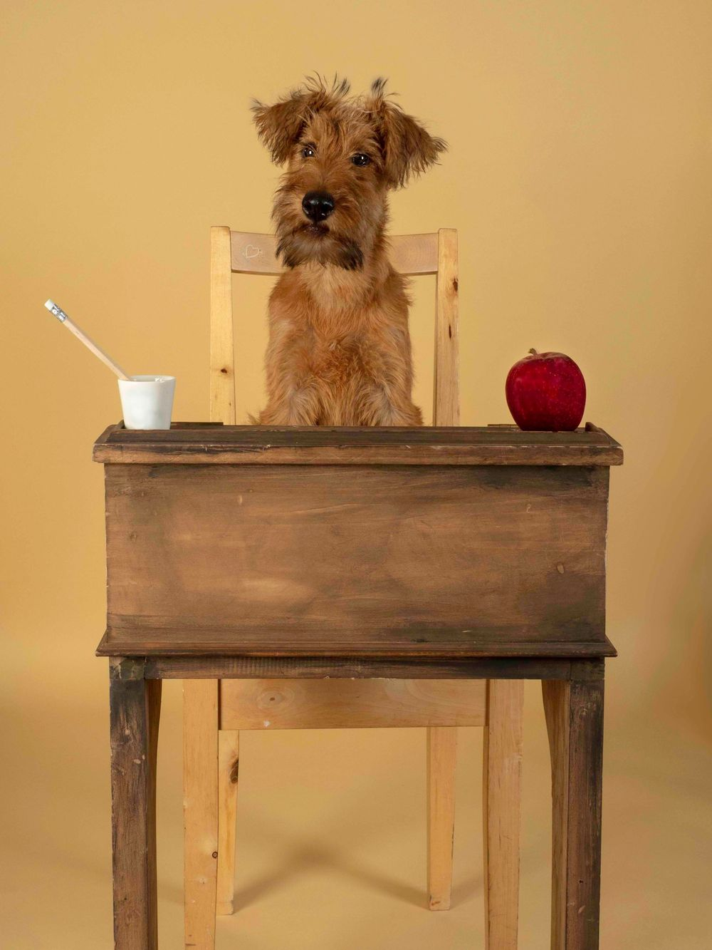 Ethel the Irish Terrier in 'When I kissed the Teacher'