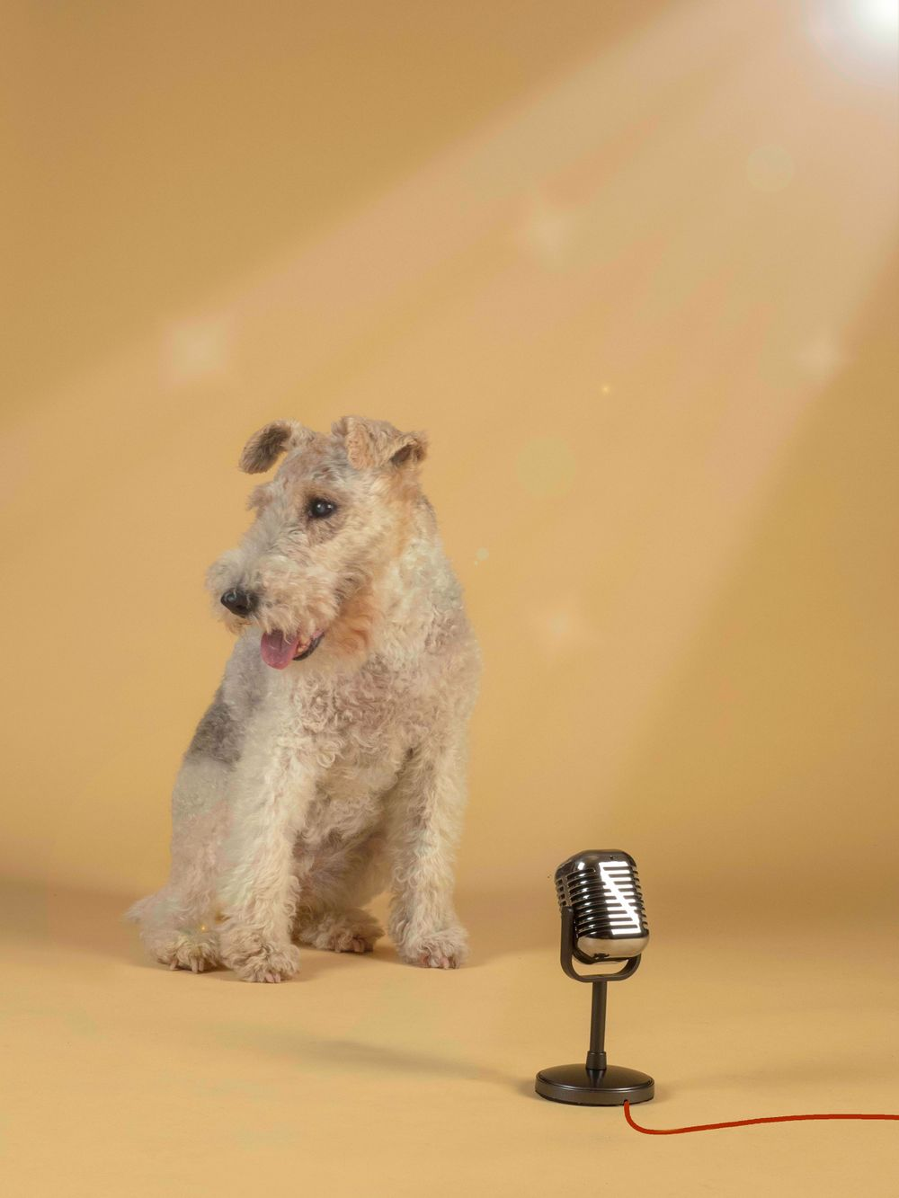 Fox Terrier Betty is our 'Super Trouper'