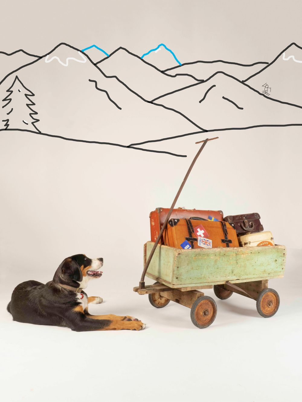 'Move On' with Harper, the Greater Swiss Mountain Dog