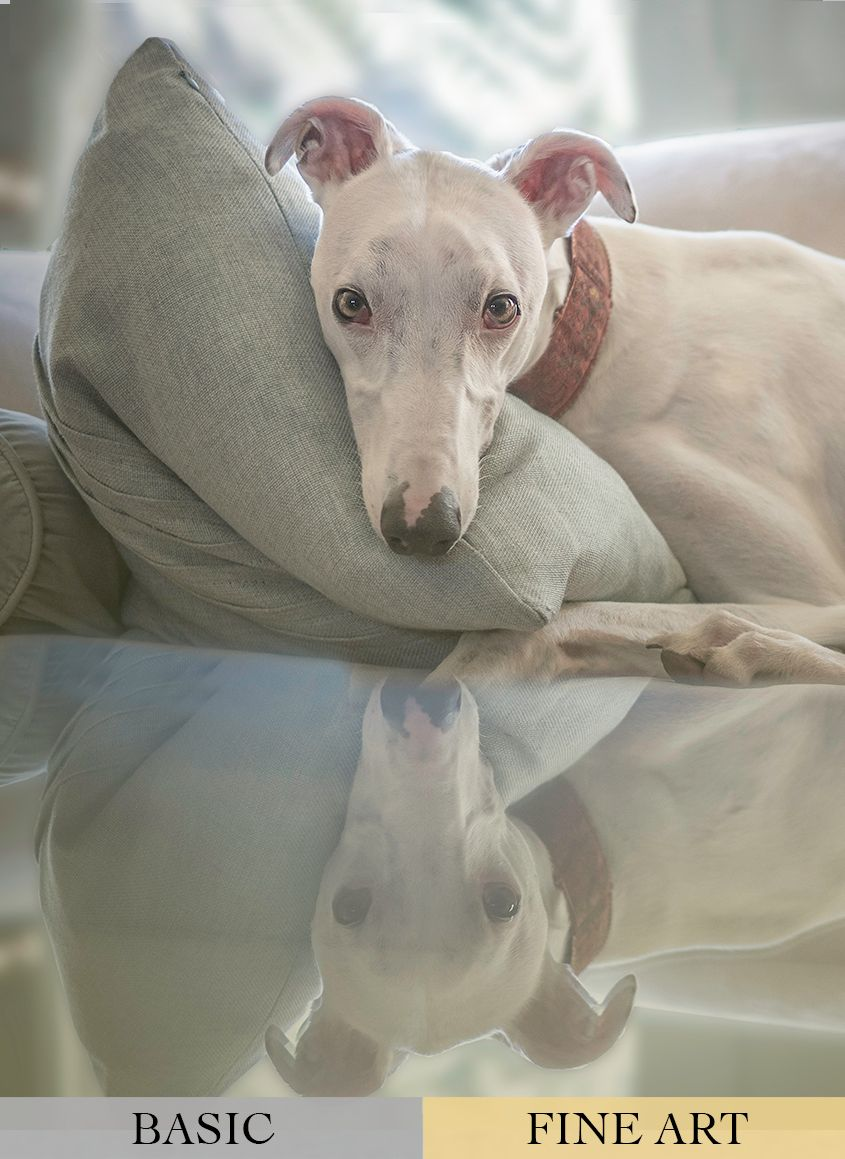 White Greyhound Dog on the Sofa by Zurich Photographer Leslie Argote