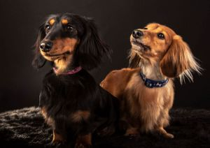Dog photographer location photography