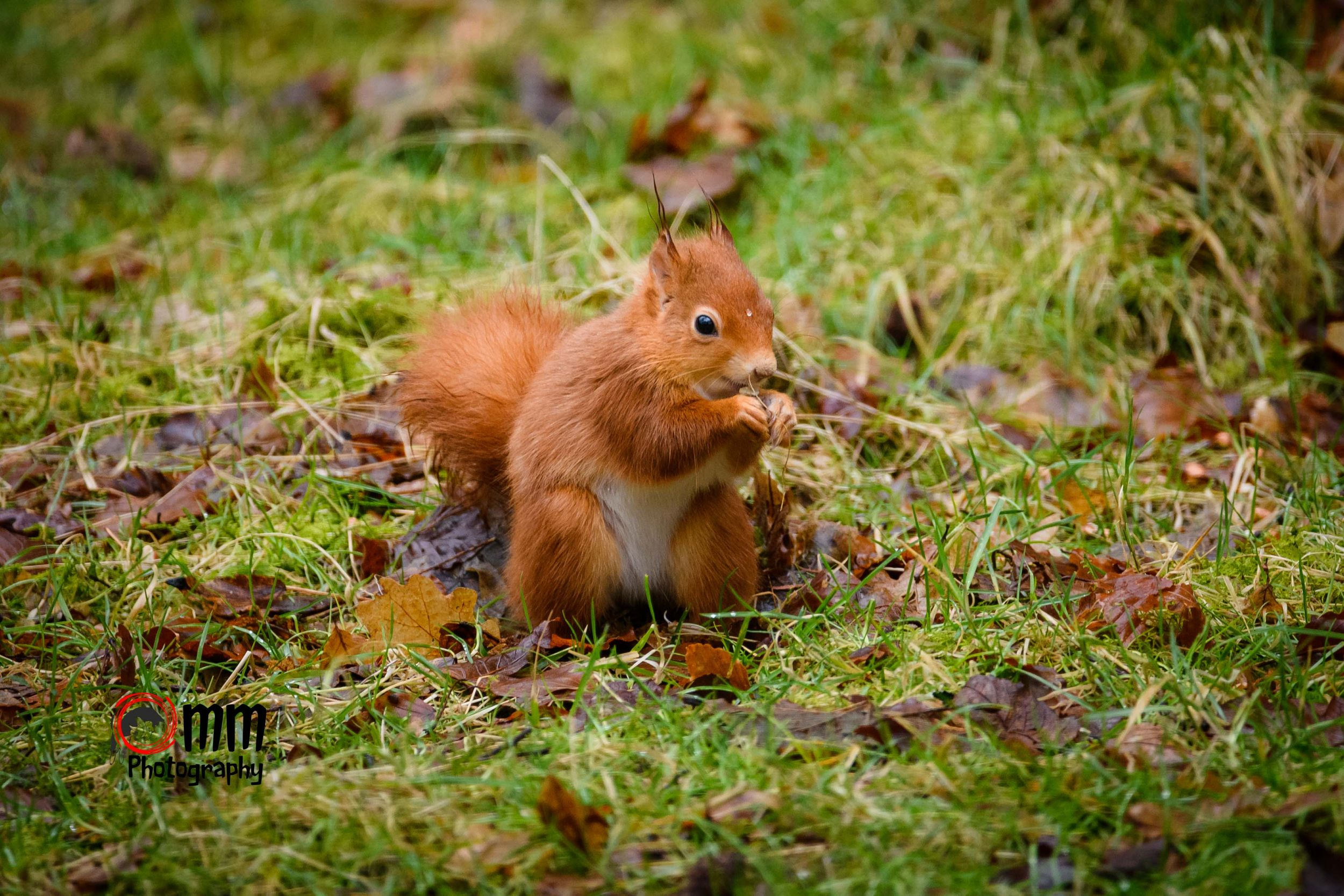 Glasgow event photographer, Glasgow wildlife photographer