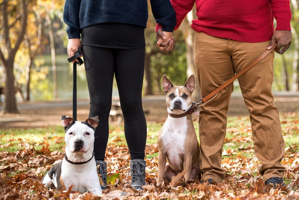 pit bull mixes with couple outside in autumn leaves