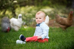 plymouth, ma child photographer | heidi harting | portrait of a baby boy with chickens in the background