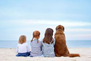 plymouth ma family photographer heidi harting captures three sisters on the beach with their old dog