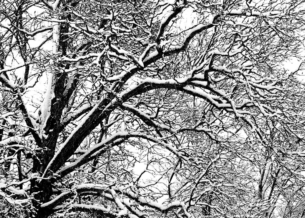 fresh fallen snow clinging to a tree on a winter day