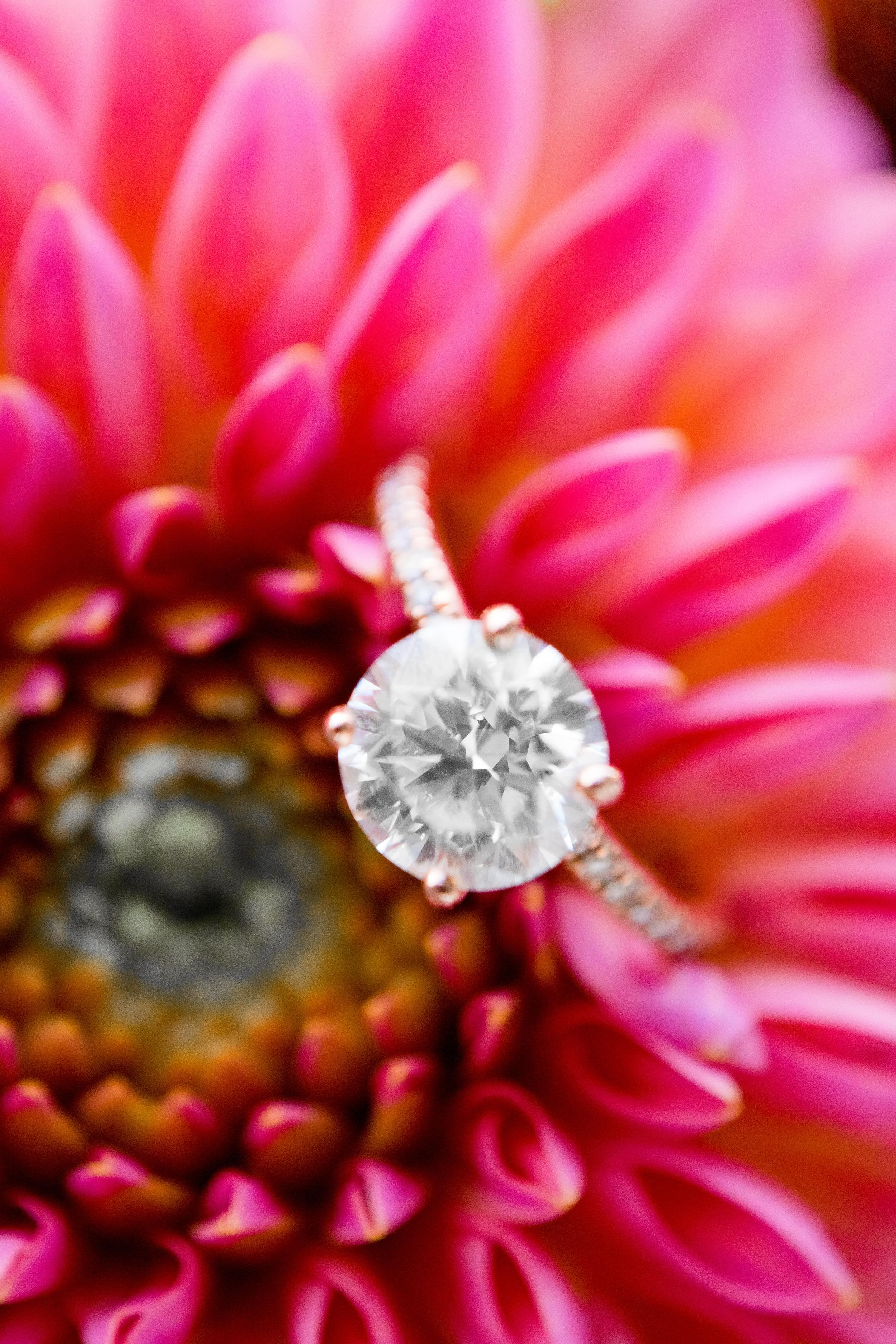 close up round diamond engagement ring in a hot pink dahlia