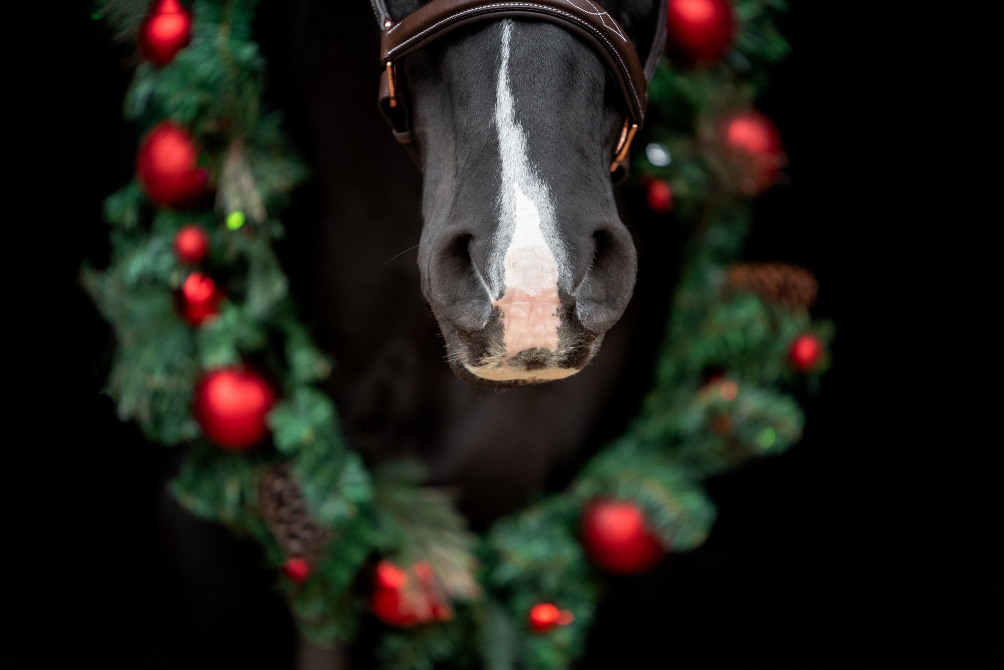 Horse muzzle with holiday wreath in background