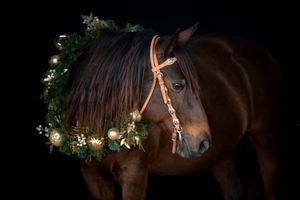 quarter horse wearing gold christmas wreath